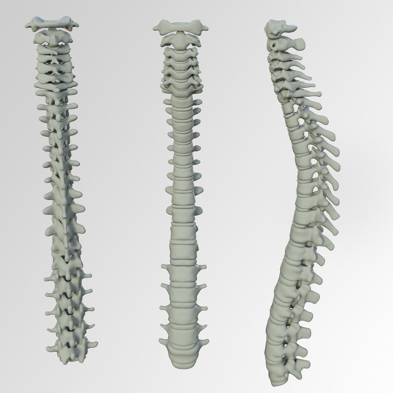 Spinal Screenings  Georgetown, SC
